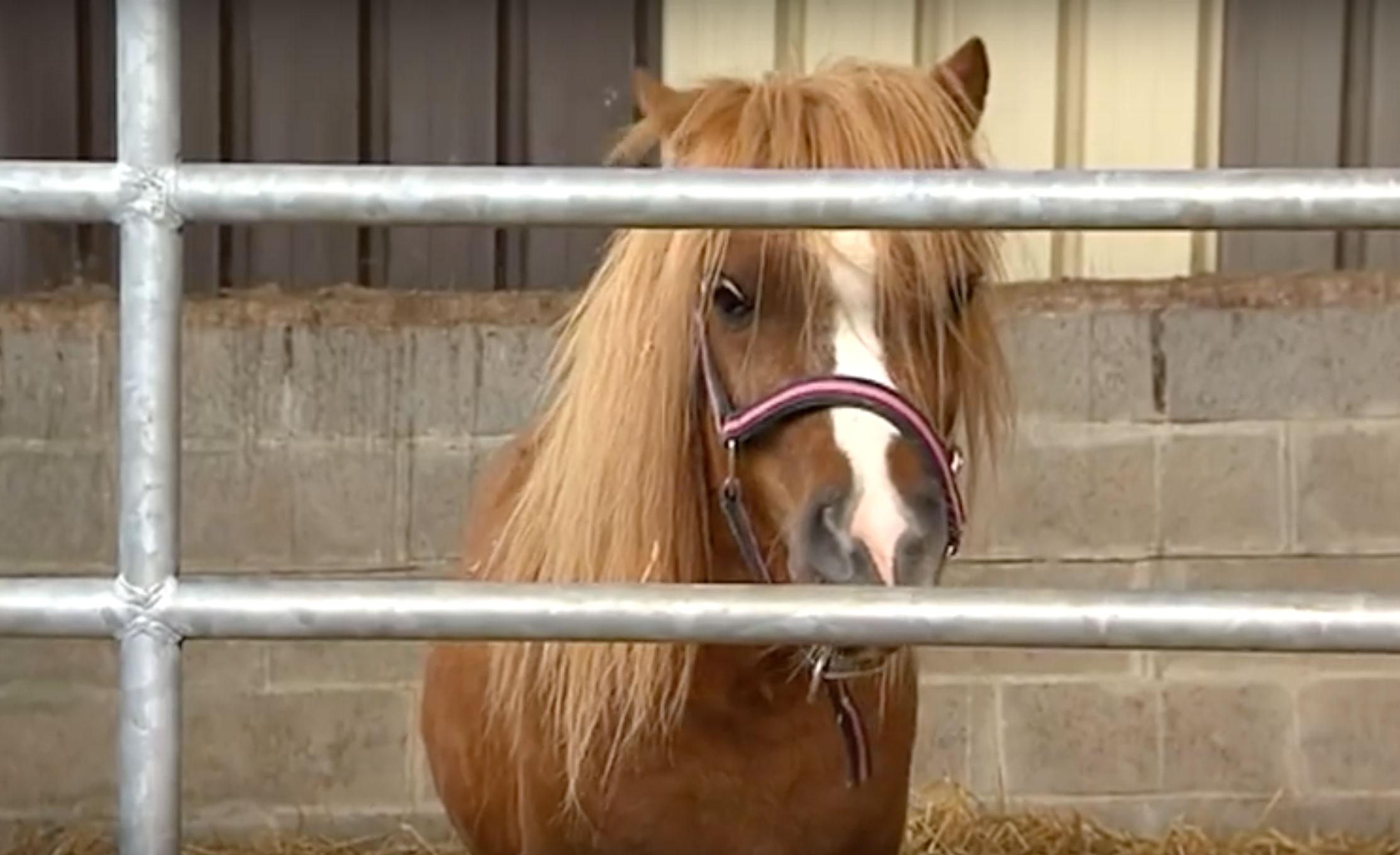 cheval derrière barrière