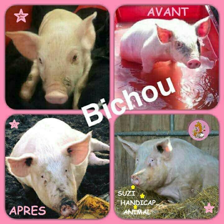Bichou