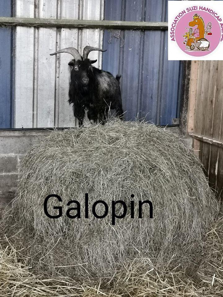 Galopin