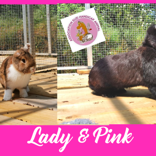 Lady & Pink